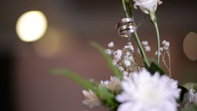 Wedding rings on a green flower. Wedding rings hanging on beauty flower stock video footage
