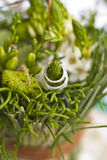 Wedding rings and green  flowers Stock Image