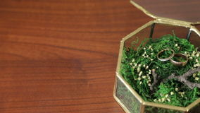 Wedding rings on green moss. stock video footage