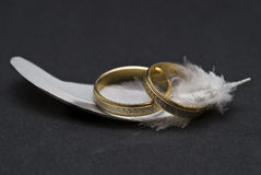 Wedding rings and hackle. Wedding rings on a black background anf a hackle Stock Images