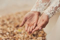 Wedding rings on hands of bride. On the beach Royalty Free Stock Photography