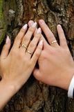 Wedding rings. Hands of bride and groom with wedding rings on tree bark background Stock Photo