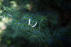 Wedding rings hang on the branches of spruce Royalty Free Stock Photo