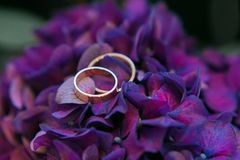 Wedding rings on hydrangea bouquet close-up, macro Royalty Free Stock Photography