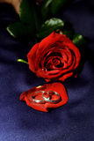 Wedding rings II. Two platin wedding rings in front of a dark red rose at blue fabric as background Stock Photo