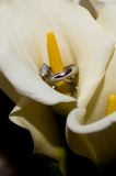 Wedding rings inside a calla lily. Wedding rings inside a white calla lily, with a black background Royalty Free Stock Photo