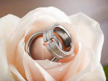 Wedding rings inside a rose blossom Royalty Free Stock Photography