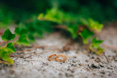 Wedding rings on the ivy Stock Photography