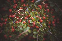 Wedding rings laying on bush with berries Royalty Free Stock Images