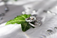 Wedding rings and leaf. Two silver or platinum wedding rings or bands on white fabric with a green leaf Royalty Free Stock Images