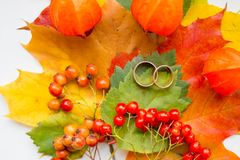 Two golden Wedding rings, colorful leaves.Creative seasonal autumn background.Wedding in fall season.maple leaves royalty free stock images