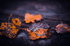 Wedding rings on leaves. Beautiful bride and groom wedding portrait Royalty Free Stock Images