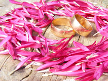 Wedding rings in the leaves of flowers Royalty Free Stock Images