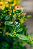 Wedding rings on the leaves of Pittosporum Royalty Free Stock Image