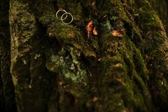Wedding rings lie on the green moss covering the bark of the tree. Wedding rings lie on green moss at the foot of the tree stock image