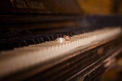 Wedding rings lie on the piano keys stock photos