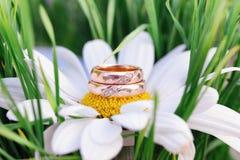 Wedding rings macro on chamomile Stock Photography