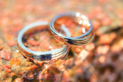 Wedding rings made of three-colored gold Stock Photos