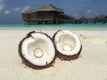 Wedding rings in the Maldives. Two Wedding rings in the coconut on background of ocean Stock Photography