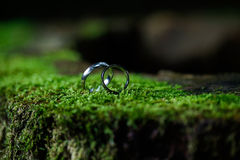 Wedding rings on moss Royalty Free Stock Photography
