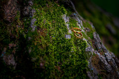 Wedding rings on moss. Two gold wedding rings lying on green moss Royalty Free Stock Photography