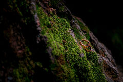 Wedding rings on moss. Two gold wedding rings lying on green moss Stock Photography