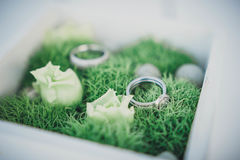Wedding rings on moss Stock Images