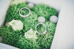 Wedding rings on moss Royalty Free Stock Photos
