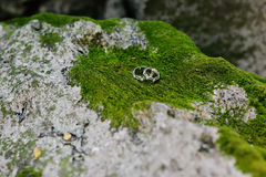 Wedding rings on moss Royalty Free Stock Photo
