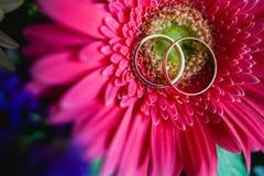 Wedding Rings Nestled Stock Photos