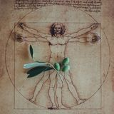 Photo of the Vitruvian Man by Leonardo Da Vinci from 1492 on tex. Wedding rings and olive branch on background with Vitruvian Man stock photo