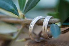 Wedding rings on the olive tree branch Stock Photos