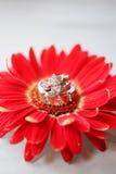 Wedding Rings On Flower Stock Image