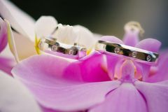 Wedding rings with orchid Royalty Free Stock Images