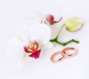 Wedding rings & Orchid. Wedding rings with orchid on white Stock Photo