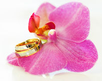 Wedding rings. On an orchid Royalty Free Stock Image