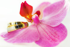 Wedding rings. On an orchid Stock Image