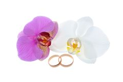 Wedding rings with orchid flowers isolated Royalty Free Stock Image