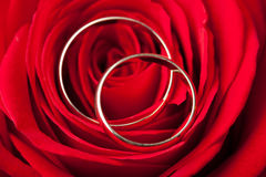Wedding rings over red rose Stock Image