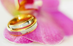 Wedding rings. On a petal of an orchid Royalty Free Stock Photos