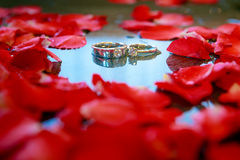 Wedding rings with petal  rose flower. - (Selective focus) Royalty Free Stock Photos