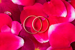 Wedding rings on the petals of red roses Stock Photo
