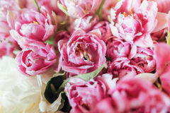 Wedding rings in a pink tulips Stock Image