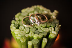 Wedding rings on plant stems Royalty Free Stock Photography
