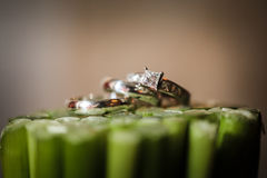 Wedding rings on plants Royalty Free Stock Images