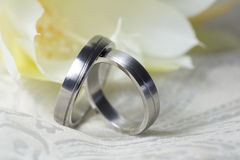 Wedding rings of platinum in close up Royalty Free Stock Photography