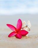 Wedding rings put on the beach Stock Image