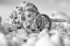 Wedding rings and rapana Royalty Free Stock Photography