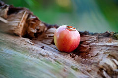 Wedding rings on the red apple. Two wedding gold rings on the red apple Royalty Free Stock Photos