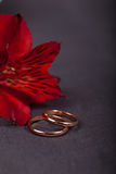 Wedding rings. With red flower on dark background Stock Photography